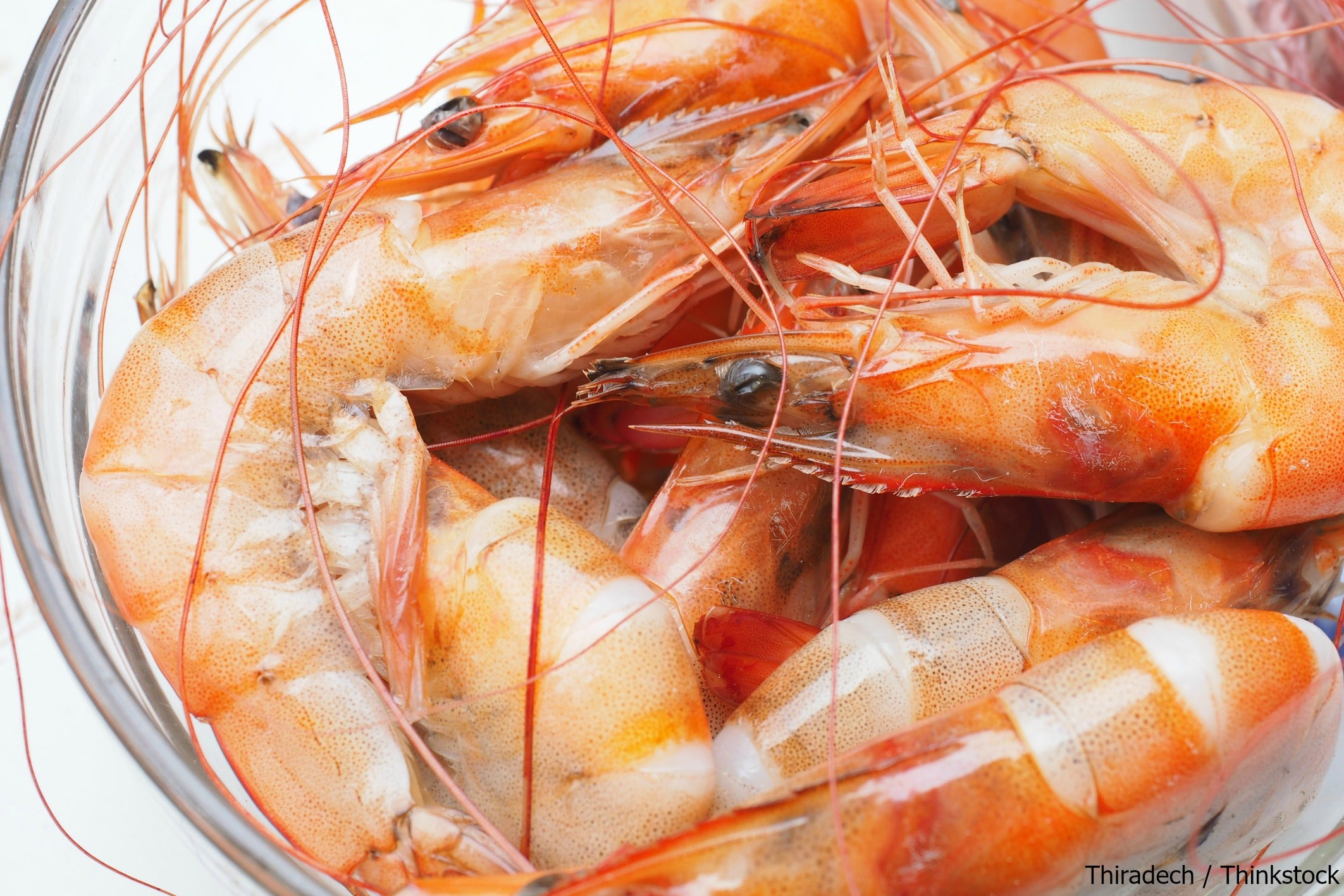 Don't Miss the Ft. Myers Beach Shrimp Festival