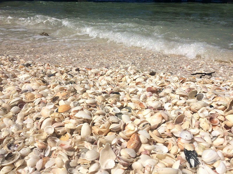 Eight Best Places to Collect Shells in Fort Myers