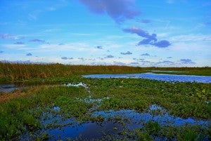 Take an Everglades Airboat Tour: A Classic Florida Adventure