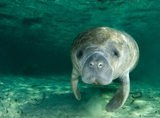 4 Things to See at the Lee County Manatee Park