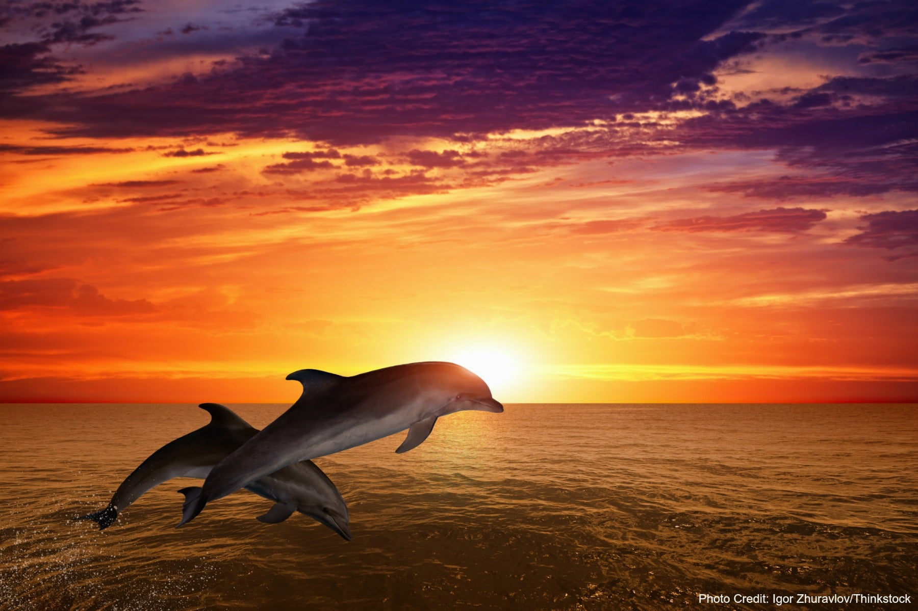 Will You See Dolphins on a Fort Myers Sunset Cruise?