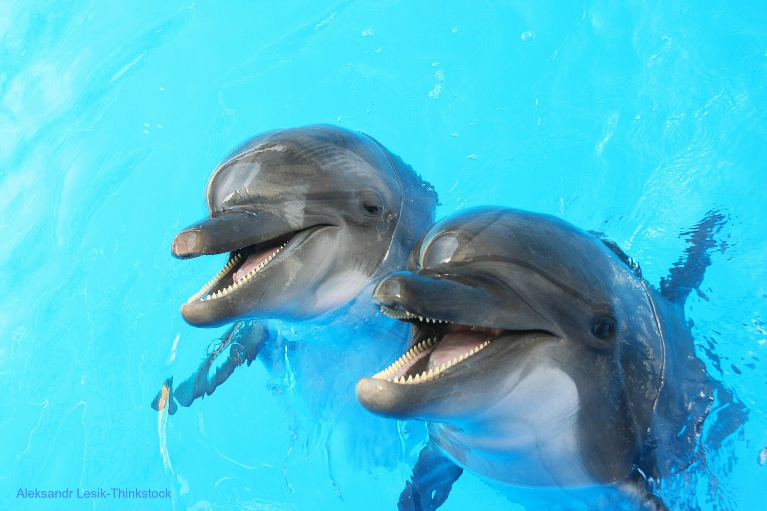 Here are the Best Fort Myers Dolphin Tours You Have to Try