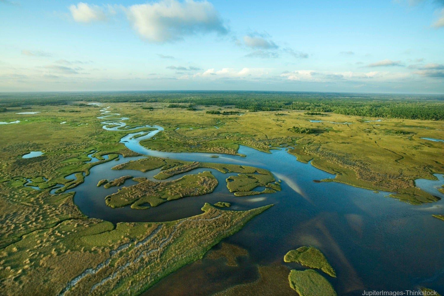 Everything You Need to Know About the Everglades Safari