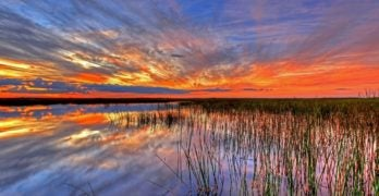 A day trip into the Big Cypress & Everglades