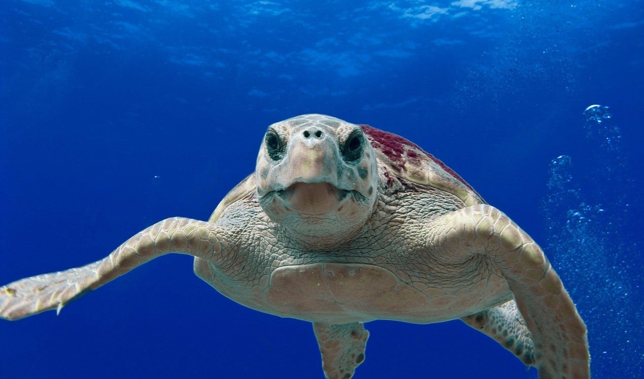 Extraordinary year for sea turtles
