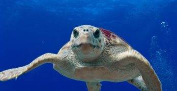 Extraordinary year for sea turtles!