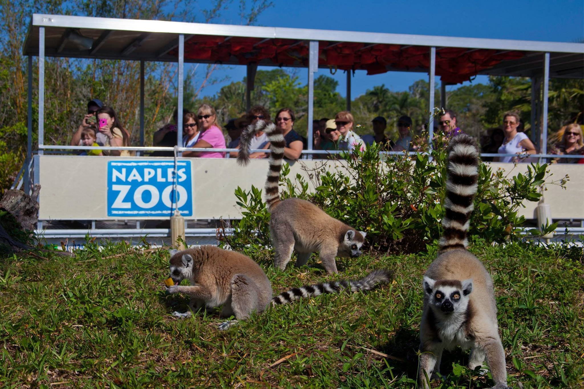 Naples Zoo At Caribbean Gardens Is Fun For All Ages Sun Palace Vacation Homes