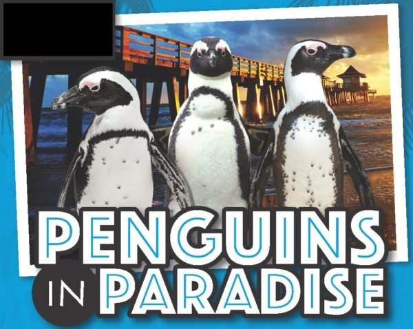 Naples Zoo hosts a traveling exhibit of penguins for the 2017-18 season.