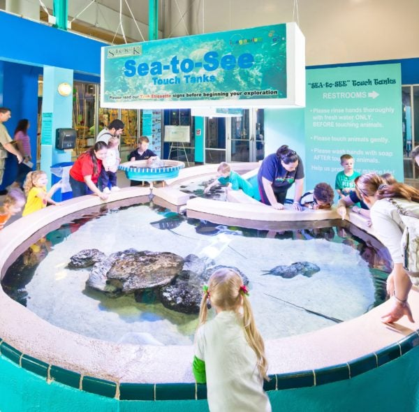 Get a hands-on experience at the SEA-to-See Touch tank.
